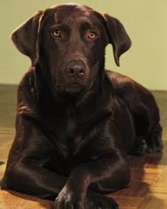 Lucky dog!