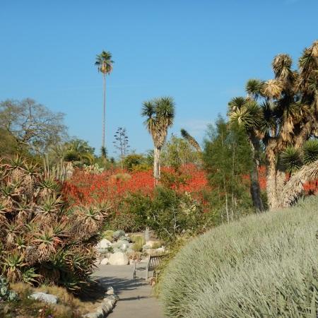 desertgarden