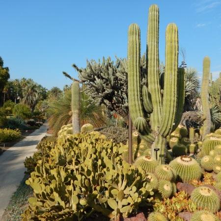 desertgarden2